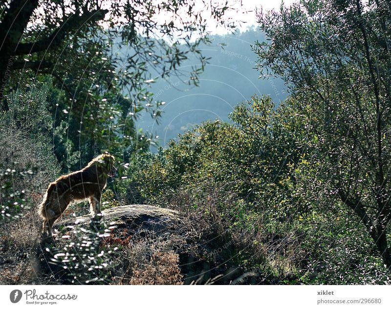 ein Hund auf dem Feld Natur Schönes Wetter Baum Sträucher 1 Tier beobachten genießen Blick springen stehen warten elegant frei Freundlichkeit schön listig