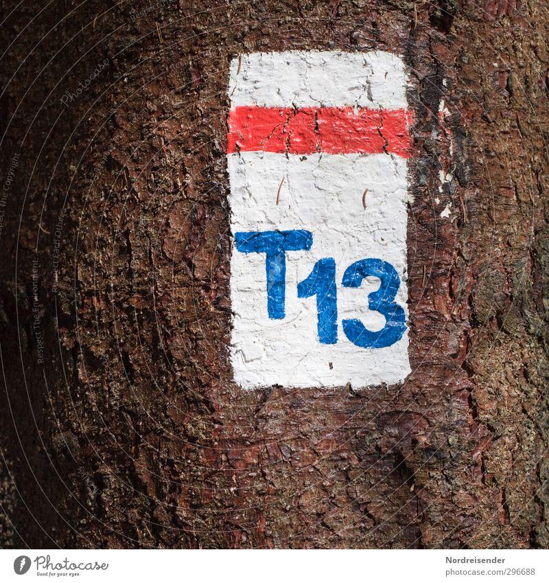 T 13 Baum Farbe Wald Wege & Pfade Holz Schilder & Markierungen wandern Tourismus Beginn Schriftzeichen Ziffern & Zahlen Zeichen Landwirtschaft Fußweg
