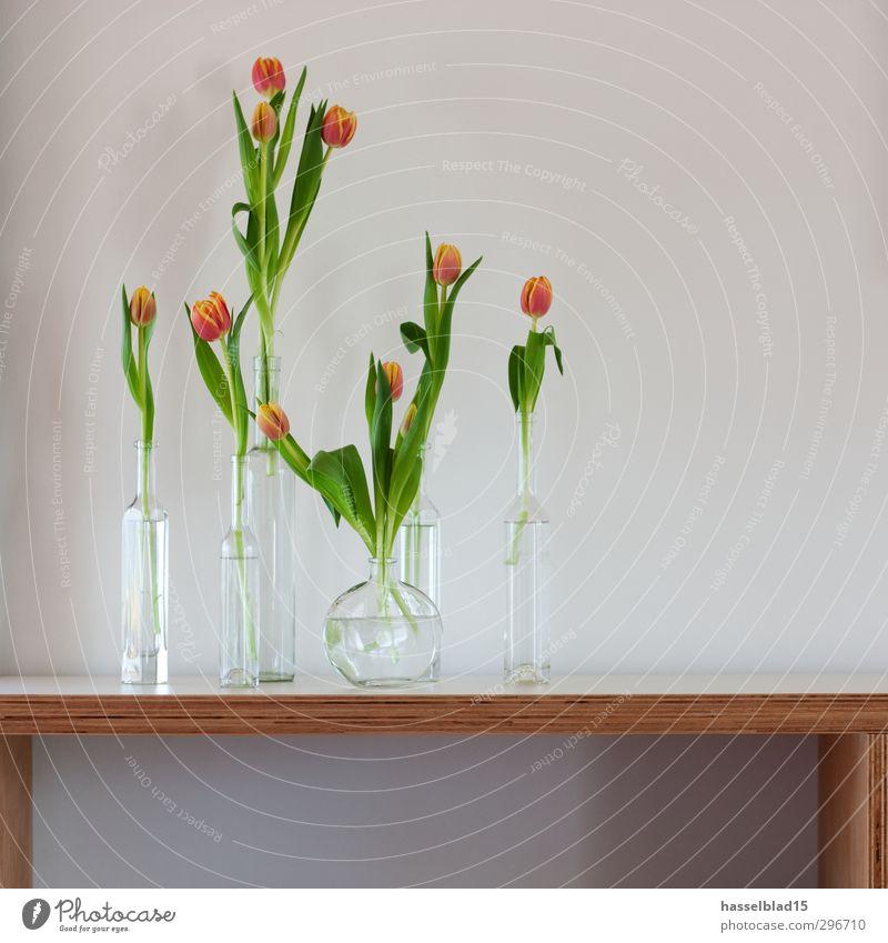 Frühling Lifestyle Reichtum elegant Gesundheit Wohlgefühl Erholung Wohnung Sommer Pflanze Blume Blüte Grünpflanze Garten Mauer Wand Liebe Tulpe Regal Glas Vase