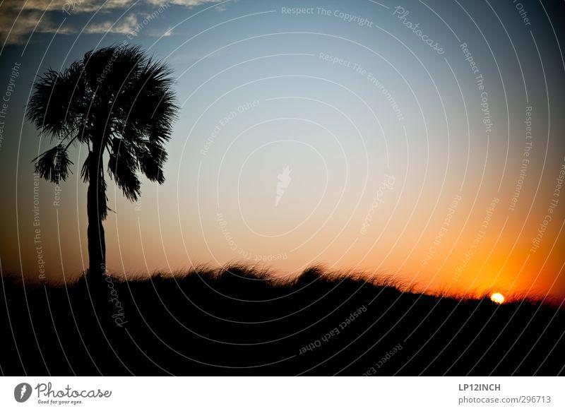 Summer. XXXXVI Ferien & Urlaub & Reisen Tourismus Ausflug Abenteuer Ferne Sommer Sommerurlaub Sonne Strand Meer Umwelt Natur Landschaft Schönes Wetter Palme