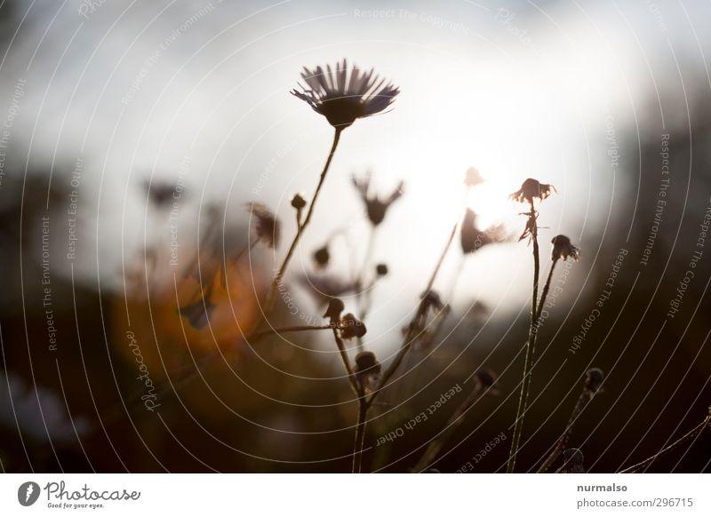 schönes Wochenende Lifestyle Traumhaus Garten Kunst Natur Pflanze Sonnenaufgang Sonnenuntergang Sommer Klima Schönes Wetter Blume Blatt Blüte Park Wiese Feld