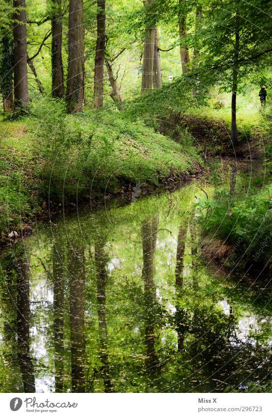 Am Fluss Natur grün Wasser Sommer Baum Landschaft ruhig Erholung Wald Gras Frühling Luft Park Freizeit & Hobby wandern Schönes Wetter