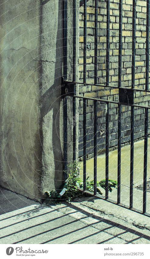 alt grün Pflanze Einsamkeit gelb Wand Traurigkeit Mauer Stein Linie geschlossen Beton Sicherheit Macht Backstein Tor