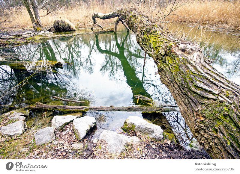 like a bridge Himmel Natur Wasser Pflanze Baum Wolken Wald Umwelt gelb Gras Frühling Holz Küste Stein braun liegen