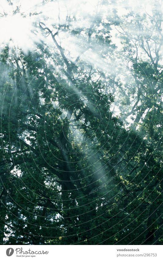 Natur grün Sommer Pflanze Baum ruhig Wald Stimmung Wetter Nebel Urelemente Coolness Gelassenheit Inspiration Lichtstrahl
