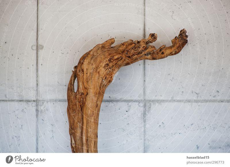 concrete wood Natur Erholung Leben Innenarchitektur Stil Holz Kunst Wohnung Design Häusliches Leben Wachstum Dekoration & Verzierung elegant modern Beton
