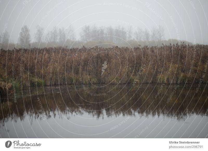 Nebeltag am Federsee I Himmel Natur Wasser Pflanze Baum Landschaft ruhig Umwelt dunkel Herbst Traurigkeit Luft natürlich stehen nass