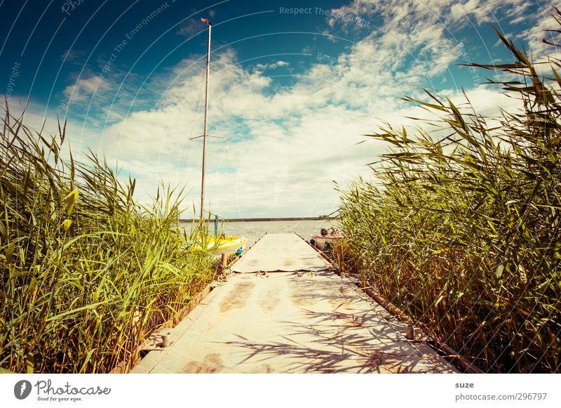 Sommerliches Anliegen Lifestyle Freizeit & Hobby Ferien & Urlaub & Reisen Sommerurlaub Umwelt Natur Landschaft Wasser Himmel Wolken Horizont Schönes Wetter