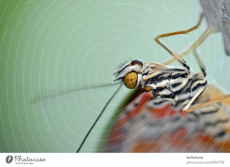 Kopflastig | bezaubernder Alien Natur grün schön Sommer Tier schwarz Auge Frühling grau hell Beine außergewöhnlich orange Wetter Wildtier sitzen