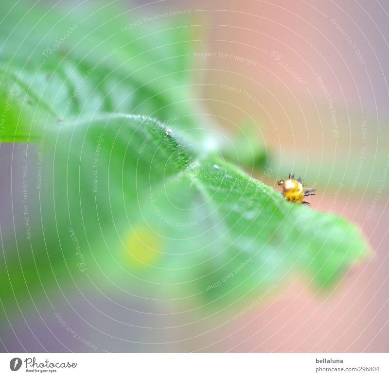 Wenn ich groß bin... Natur Wetter Schönes Wetter Tier Wildtier Schmetterling Tiergesicht 1 Tierjunges Fressen gelb grün schwarz Raupe Larve Blatt Pflanze