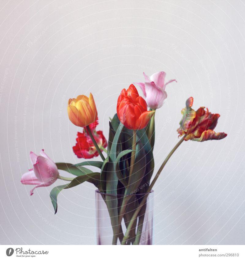 kopflastig | Bloß nicht den Kopf hängen lassen ;-) Frühling Sommer Blume Tulpe Dekoration & Verzierung Blumenstrauß Blumenvase Vase Glas ästhetisch Duft retro