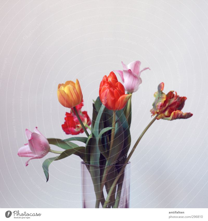 kopflastig | Bloß nicht den Kopf hängen lassen ;-) grün schön Sommer Blume rot gelb Blüte Frühling rosa orange Dekoration & Verzierung Glas Geburtstag