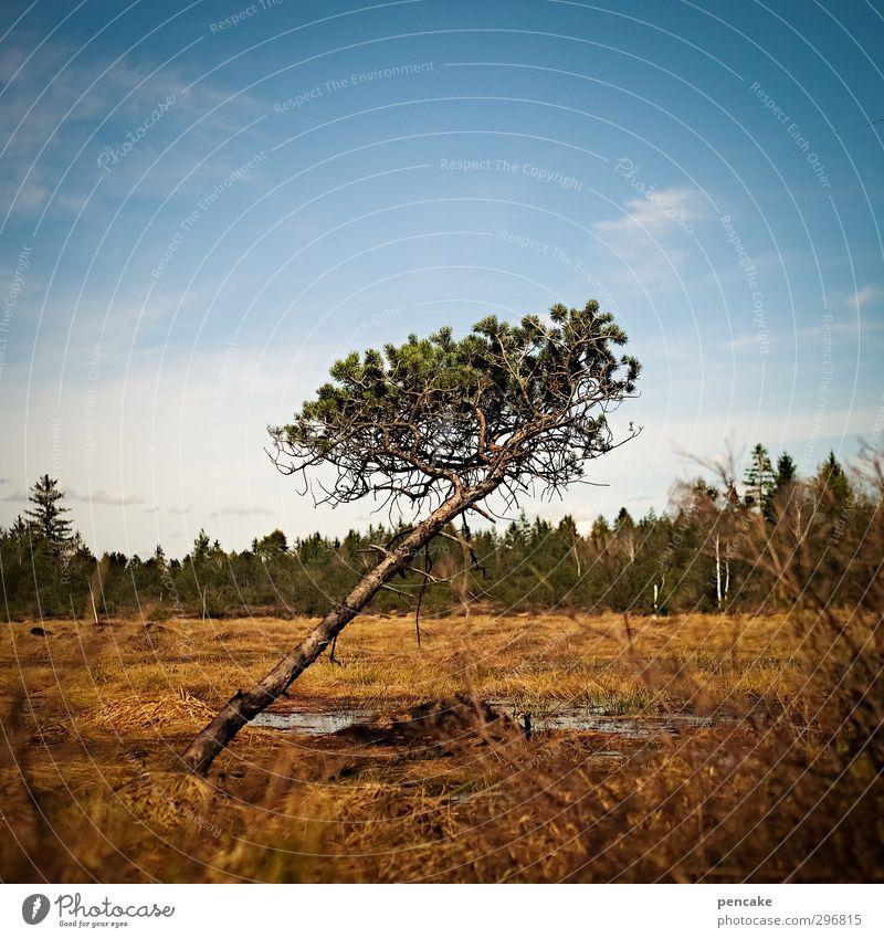 kopflastig | stille verbeugung Natur blau Baum Landschaft ruhig gelb Gras Frühling Kopf leuchten stehen ästhetisch Wandel & Veränderung fallen Zeichen Neigung