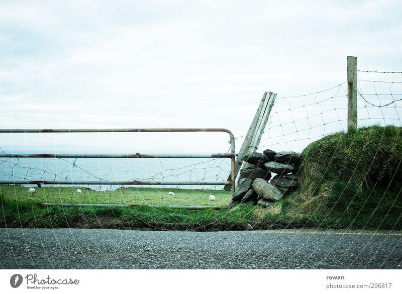 landstraße Wiese Feld Verkehr Verkehrswege Autofahren Straße Wege & Pfade Tier Nutztier 4 Herde natürlich grün Asphalt Schaf Schafherde Republik Irland Meer Tor