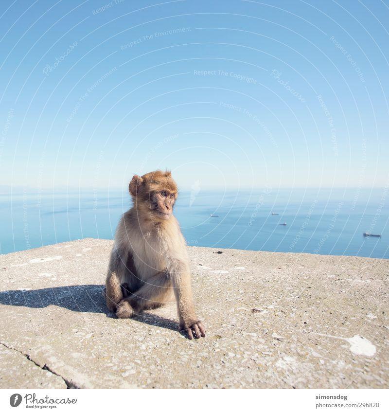 affig Wasser Himmel Wolkenloser Himmel Horizont Schönes Wetter Meer Tier Wildtier Affen 1 beobachten sitzen Mauer Wasserfahrzeug Schifffahrt eitel Körperhaltung