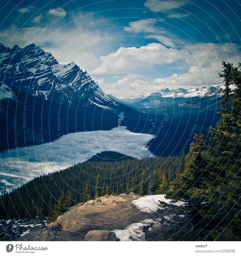 Eisbader-Paradies Landschaft Frühling Wald Berge u. Gebirge Küste See kalt grün Natur Kanada Icefield Parkway Rocky Mountains Nadelwald gefroren Farbfoto