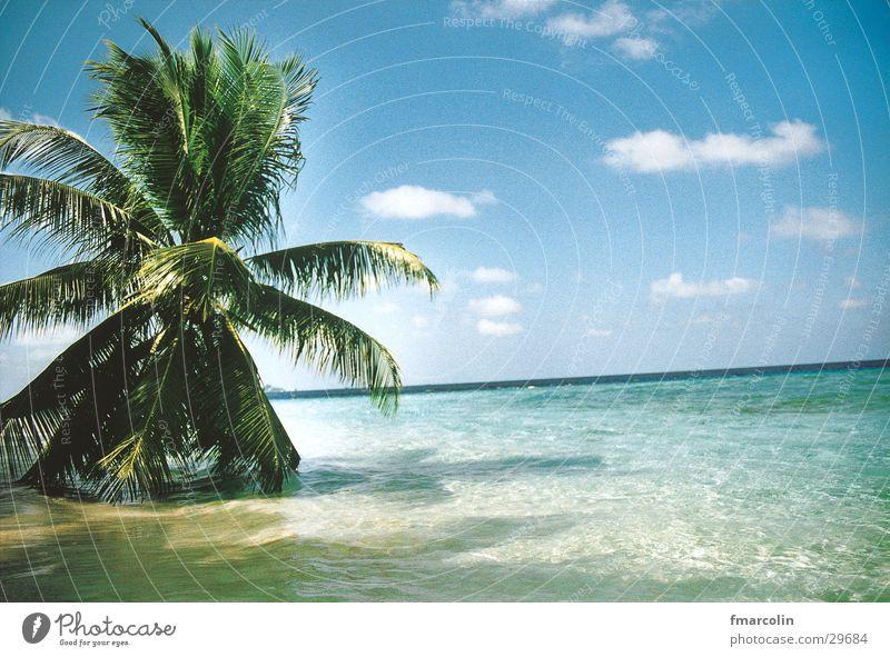 paradise Wasser Sonne Meer Wolken Sand Palme