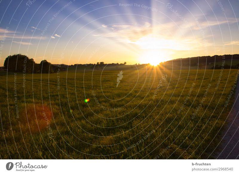 Sonnenuntergang Natur Landschaft Sonnenaufgang Sommer Schönes Wetter Gras Wiese Feld Wald frei Fröhlichkeit Hoffnung Horizont Idylle Weide Abendsonne Österreich