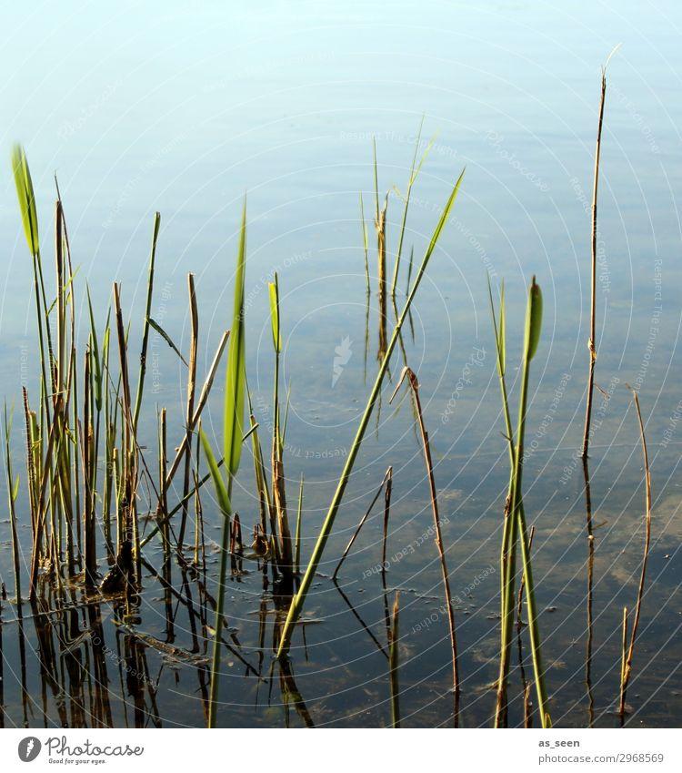 Am Badesee Ferien & Urlaub & Reisen Ausflug Fahrradtour Sommer Umwelt Natur Landschaft Pflanze Wasser Frühling Schönes Wetter Schilfrohr Gras Seeufer Flussufer