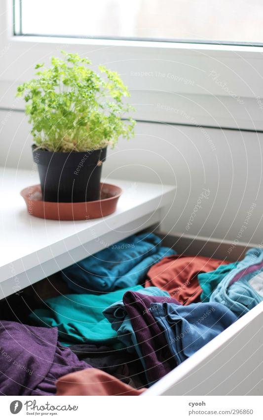 Your closet. blau grün Erholung kalt Leben Autofenster Stil Gesundheit hell Raum Wohnung Ordnung Wachstum leuchten modern frisch