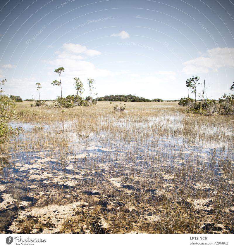 Tropisches Marschland. XXXXVII Ferien & Urlaub & Reisen Tourismus Ausflug Abenteuer Ferne Expedition Wassersport wandern Kajak Kanu Umwelt Natur Landschaft