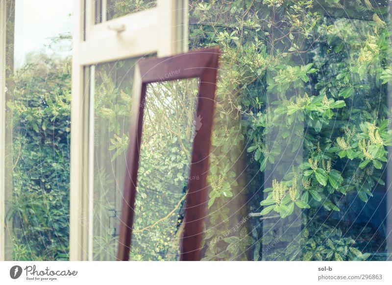 Reflexionen Häusliches Leben Haus Garten Innenarchitektur Spiegel Natur Pflanze Sträucher Fenster braun grün Glas Wintergarten Außenaufnahme seltsam