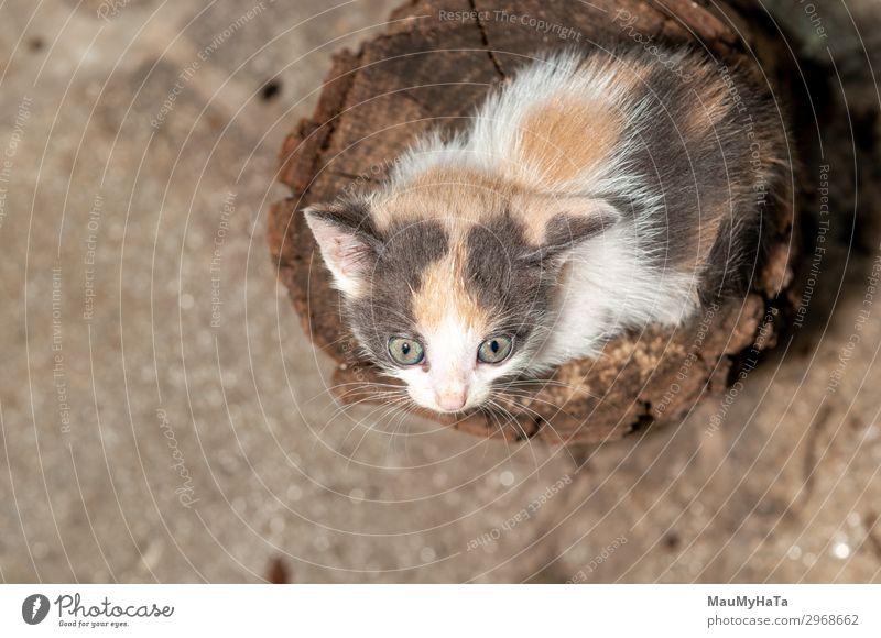Kleine Katze beim Spielen auf dem Haus Freude schön Baby Kindheit Natur Tier Pelzmantel Haustier sitzen klein lustig niedlich weich grau rot weiß Katzenbaby