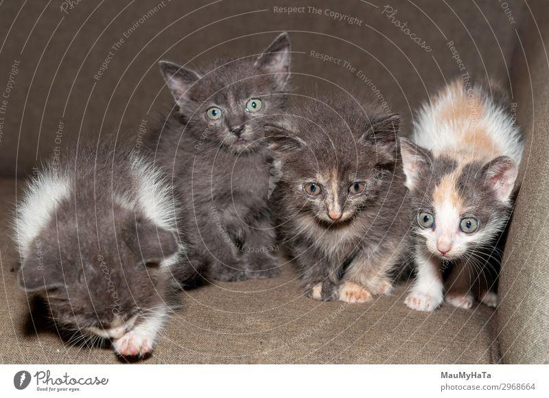 Katze Natur schön weiß rot Tier Freude lustig klein Spielen grau Kindheit sitzen Baby niedlich weich