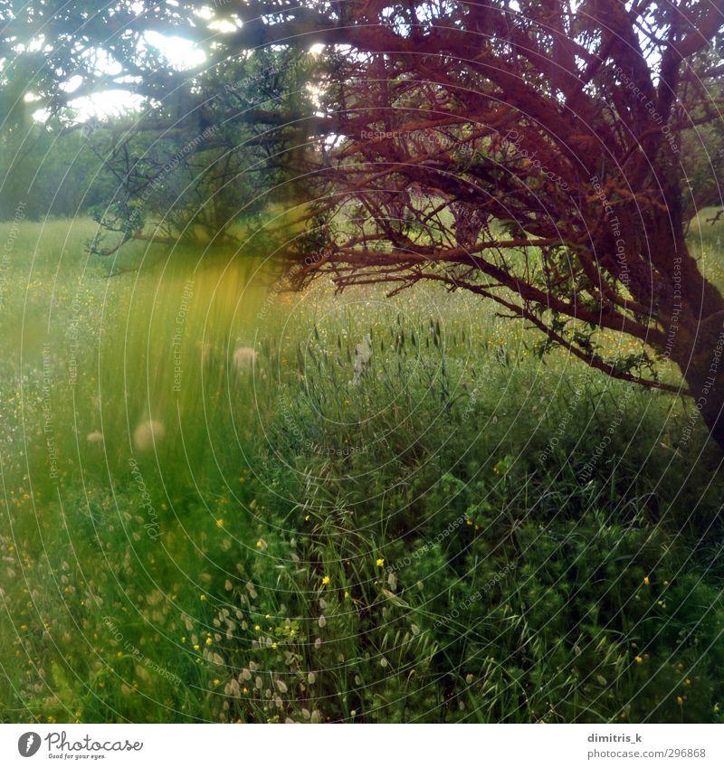 gelbe Blumen Abstraktion Natur Landschaft Pflanze Frühling Baum Gras Wald träumen verblüht retro Farbe Surrealismus Verzerrung gemalt Wiesenblume Light leak