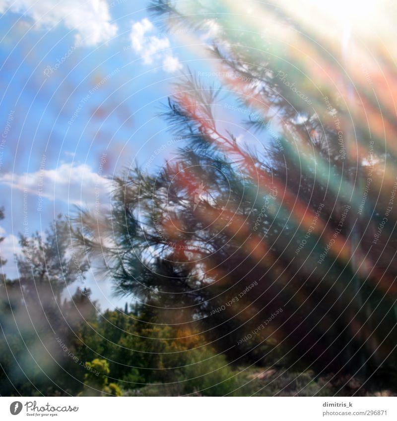 Zweige bemaltes Glas Natur Landschaft Pflanze Himmel Wolken Frühling Wetter Baum Blatt Wald träumen verblüht hell retro Farbe Surrealismus Streifen
