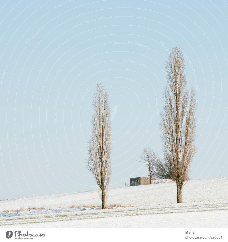 Toskana des Nordens Umwelt Natur Landschaft Pflanze Himmel Winter Schnee Baum Pappeln Feld Hütte Gebäude Transformator Wachstum kalt blau nachhaltig ruhig