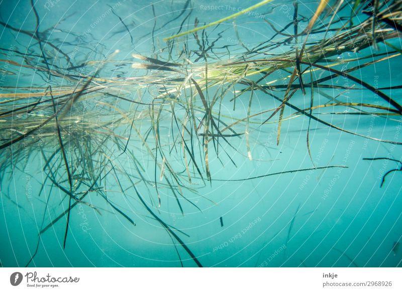 Seegras Natur Pflanze Wasser Sommer Schönes Wetter Gras Meer Wasseroberfläche authentisch natürlich blau grün Meerwasser Unterwasseraufnahme Im Wasser treiben