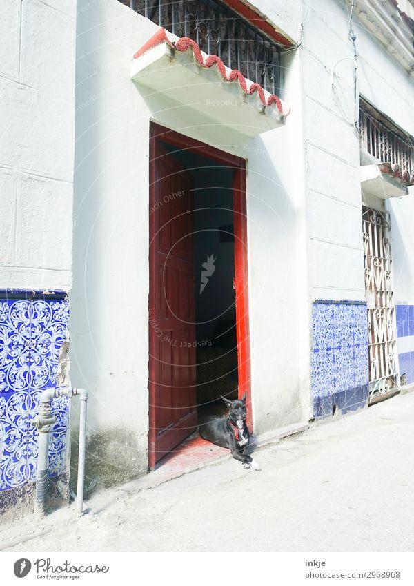 kubanischer Wachhund Menschenleer Haus Eingang Mauer Wand Fassade Tür Tier Haustier Hund 1 authentisch blau rot weiß Kuba Hauseingang Farbfoto mehrfarbig