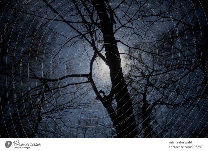 Sonnenfinsternis Natur Landschaft Himmel Nachthimmel Klimawandel Unwetter Nordlicht Baum Park Wald Menschenleer Kraft Macht Vorsicht ruhig Weisheit Ausdauer