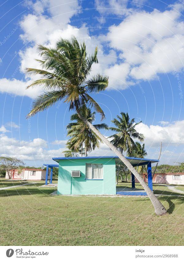 kubanische Palme Himmel Sommer Schönes Wetter Wiese Menschenleer Haus Ferienhaus authentisch einfach blau grün Kuba Farbfoto Außenaufnahme Tag Licht Kontrast
