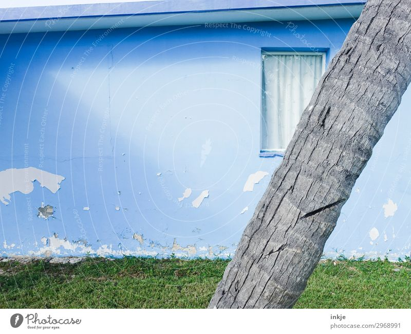 Kubanischer Anschnitt Sommer Schönes Wetter Baum Baumstamm Palme Wiese Menschenleer Haus Fassade Garten Fenster alt authentisch einfach hell kaputt blau grau