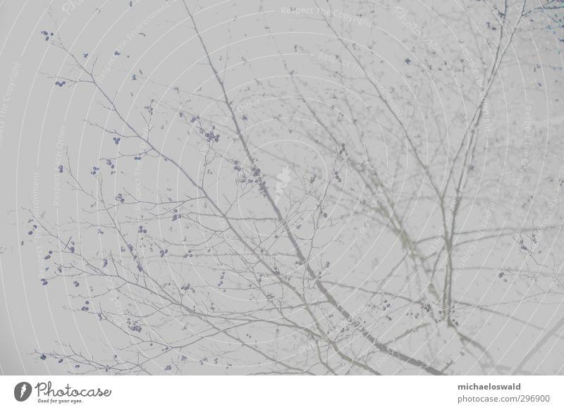 Papierbaum Himmel Natur blau Himmel (Jenseits) Baum Landschaft Wald Blüte Kunst grau Park Eis Wachstum leer Ast Frost
