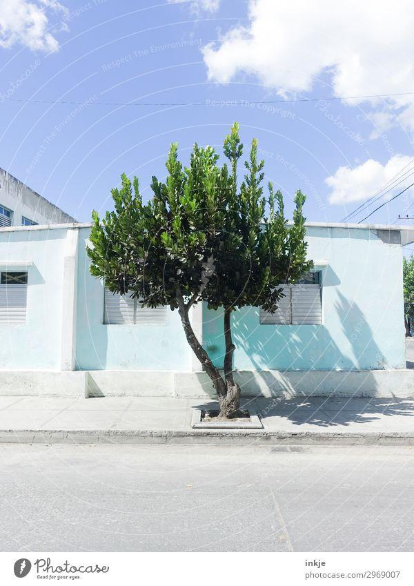 kubanischer Baum Himmel Sommer Schönes Wetter Menschenleer Haus Straße Bürgersteig authentisch einfach natürlich blau grün Kuba Farbfoto Außenaufnahme Tag Licht