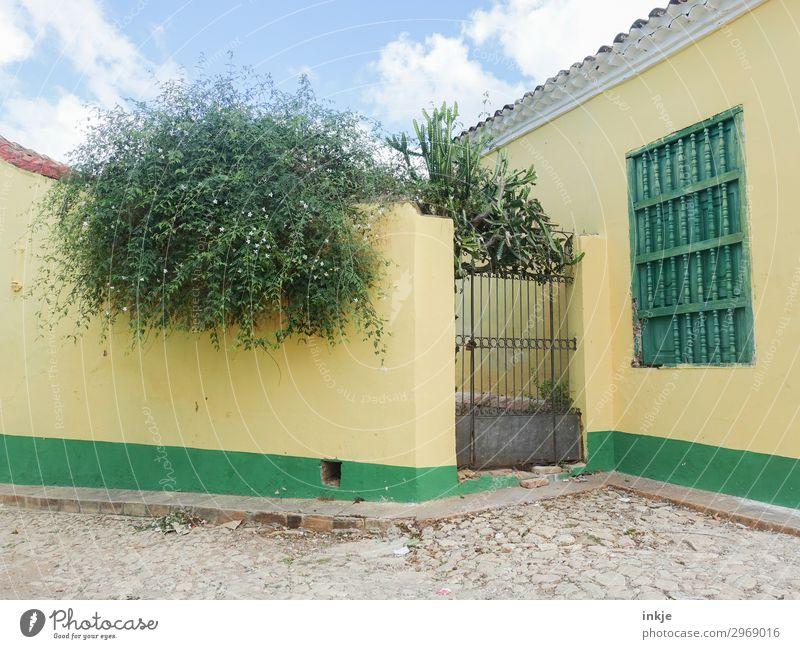 kubanischer Hinterhof Sommer Pflanze blau grün Baum Haus gelb Wand natürlich Mauer Sträucher Platz Dorf Kuba Tor