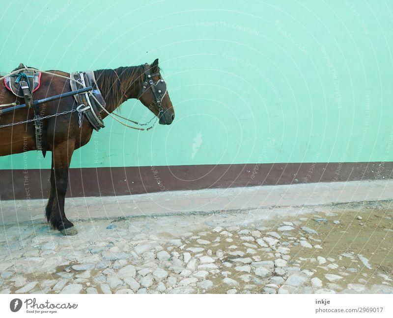 halbes kubanisches Pferd alt grün Tier Wand natürlich Mauer Fassade Verkehr stehen authentisch warten einfach Güterverkehr & Logistik Gelassenheit Kuba