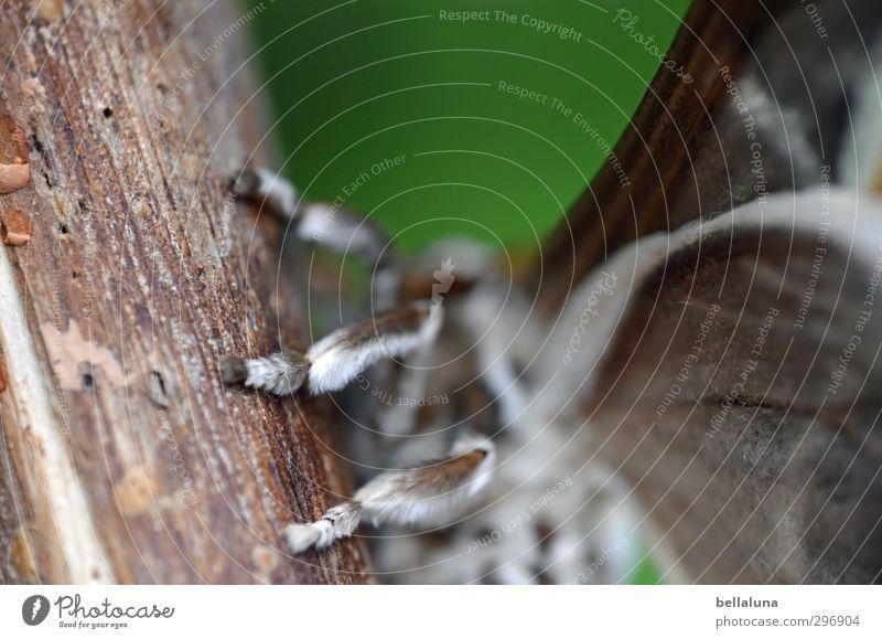 Tarantula? Natur schön grün Baum Tier Wiese grau natürlich außergewöhnlich Garten Beine braun Behaarung Park sitzen Wildtier