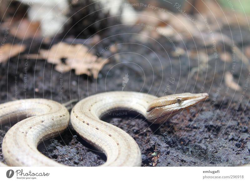 be aware of snakes Natur Tier Wald braun außergewöhnlich Wildtier Schlange