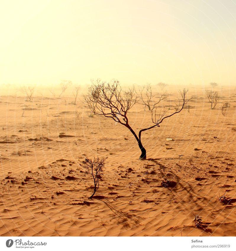 Dürre vor dem Sturm Natur Ferien & Urlaub & Reisen Sommer Pflanze Sonne Landschaft Umwelt Ferne Freiheit Sand Wind Erde Klima Tourismus Sträucher Ausflug