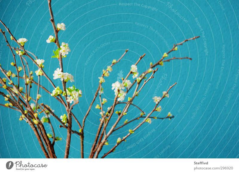 Erinnert an Meer... Natur blau weiß Sommer Pflanze ruhig Erholung Ferne Wärme Frühling Freiheit Blüte natürlich Stimmung frisch Idylle