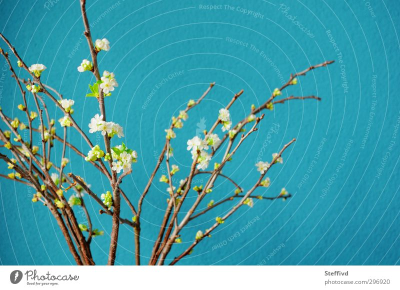 Erinnert an Meer... Wellness Wohlgefühl Erholung ruhig Meditation Duft Ferne Freiheit Sommer Natur Pflanze Frühling Blüte ästhetisch Freundlichkeit Fröhlichkeit