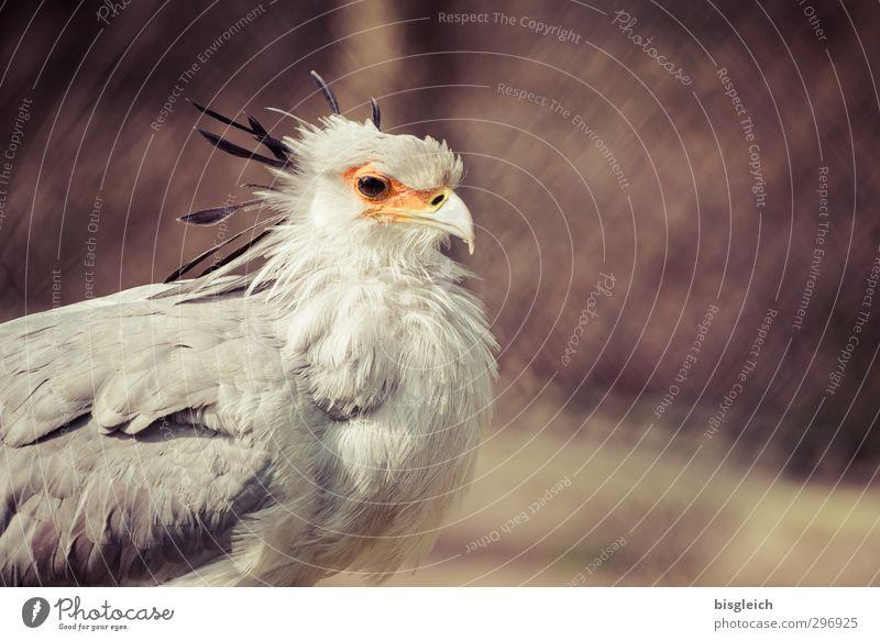 Sekretär Tier grau braun Vogel orange Tiergesicht Zoo Büroangestellte