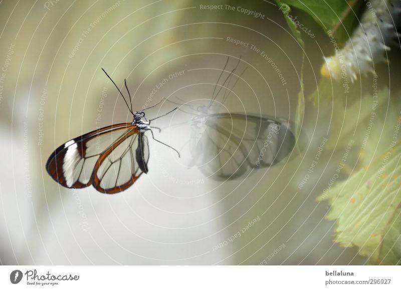 Grazie vs. Moppelchen Natur Pflanze Tier Wetter Schönes Wetter Blatt Wildtier Schmetterling 2 Fressen sitzen ästhetisch außergewöhnlich dick exotisch natürlich