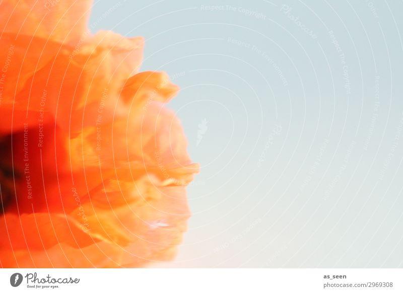 Summervibes Ferien & Urlaub & Reisen Ausflug Fahrradtour Umwelt Natur Pflanze Frühling Sommer Blume Blüte Mohn Mohnblüte Blütenblatt Feld Bewegung Blühend
