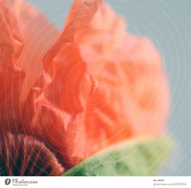 Blütenknospe Natur Sommer Pflanze Farbe schön grün rot Blume Blatt Lifestyle Umwelt Frühling natürlich orange Design