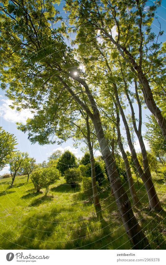 Hohe Bäume Ferien & Urlaub & Reisen Insel Küste Mecklenburg-Vorpommern mönchgut Natur Reisefotografie Rügen Tourismus Wald Park Baum Baumstamm Ast Zweig grün